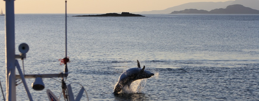 Cherokee-dolphin-show-Mull