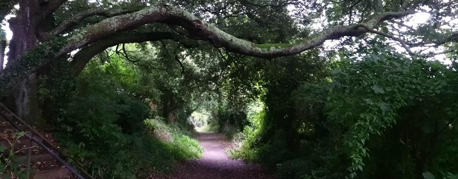 woodland walk Cornwall